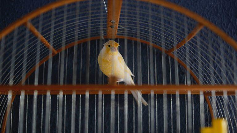 Het verhaal van het vogeltje